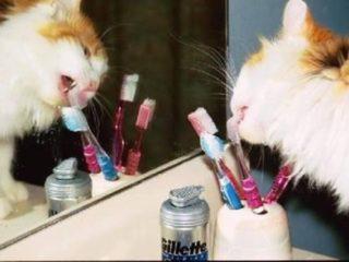 Gato lamiendo un cepillo de dientes